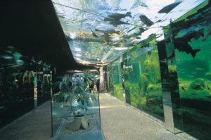 the-aquarium-of-black-perigord