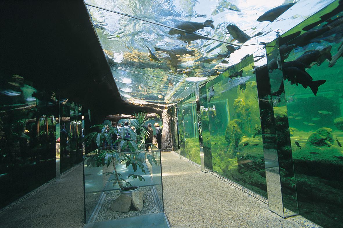 les-lavandes-the-aquarium-of-black-perigord